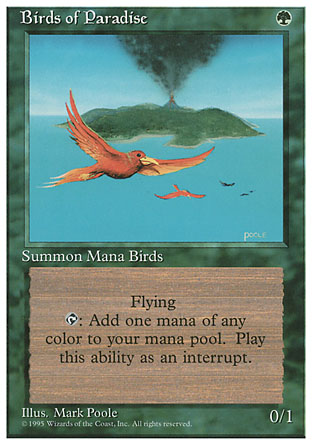 Birds of Paradise | 4th Edition