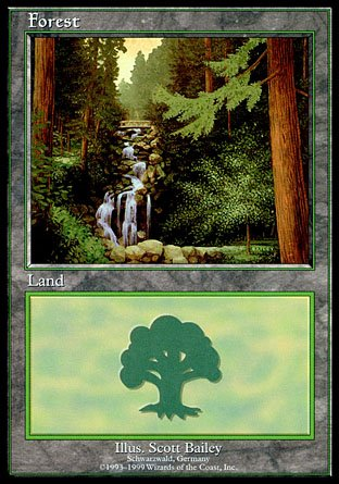 Forest | Euro Land