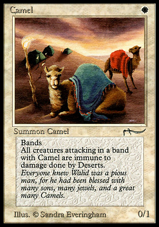 Camel | Arabian Nights